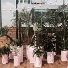 드디어 엘큐브 오픈. 애증의 Pink tropical... 내가 좋아하는 열대식물과 다육이들 총집합! . #홍대#엘큐브#엘큐브오픈 #rooftop#ecobags #catus #tropical by hyojung.han