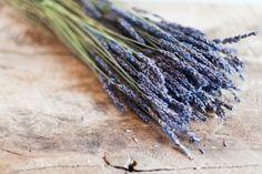 Lavender. Ali Harper photography