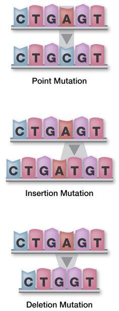 3 types of genetic mutations