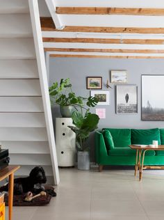 Green velvet sofa, grey walls and wood beams in a lovely laid back flat in Malmö, Sweden - Bolaget