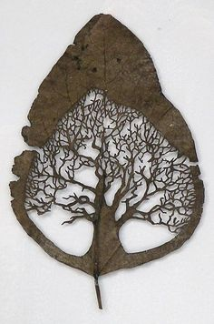 Spanish artist Lorenzo Duran uses leaves as the canvas for his cutaway art. after washing and drying the leaf, he carefully cuts away segments in a technique akin to those of traditional Spanish picado, Chinese jianzhi, German scherenschnitte, or Swiss paper-cutting.