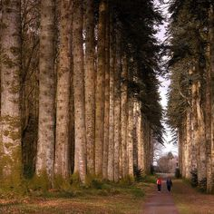 Majestic trees, Kilkenny Ireland ~ photo by Edward Dullard