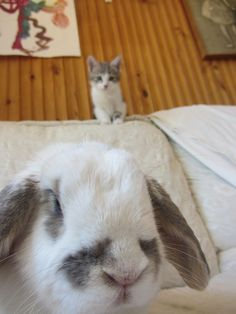 <b>To be a truly great animal photobomber you must first be an artist.</b> After that, obviously, you have to be an animal of some kind. These are the animals who 'bombed the best in 2013.