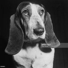 News Photo : TV star dog J. J. Morgan posing for a Life...