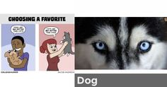 Dog | Are you a Cat or Dog?