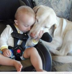 Sleeping Dog & Baby. Just love the kid's hand cupping the dog's jowl. Lovely. Cute is understatement.