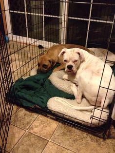 Daisy and Duke!