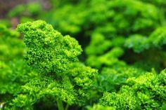 Ayurveda & Alkaline Foods in LiveStrong.com