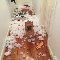 NO.....THE TRUTH IS....THE PILLOW ATTACKED ME!