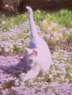 Angel Aesthetic, Nature Aesthetic, Aesthetic Vintage, Aesthetic Photo, Aesthetic Pictures, Softies, Cute Cats, Funny Cats, Animals And Pets