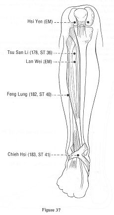 bottom-leg