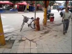 Dog Guards Owner's Bike. Be sure to watch until the end.