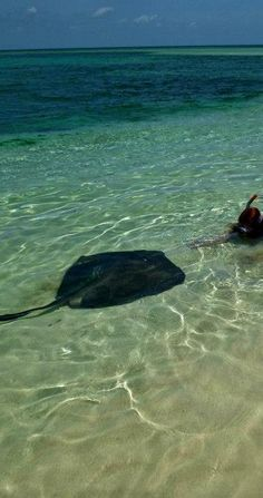 Play with stingrays on Sandy Cay - West End, Grand Bahama