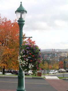 Lamp post in Hershey, PA