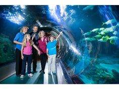 SEA LIFE Orlando Aquarium - Popular Attractions in Orlando, Florida
