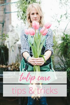 Simple Steps to Care for Your Tulips / How to Grow Tulips