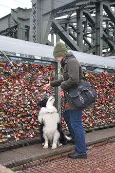 Happy Valentine greetings from our trip to the Hohenzollern Bridge of Cologne which is famous for its numerous love locks! Very kind wishes from Germany Susanne & Burkhard & Julian & Joey (the Border Collie) :-) Love Lock, Valentines Greetings, Border Collie, Cologne, Locks, Bridge, Germany, Shoulder Bag, Adventure