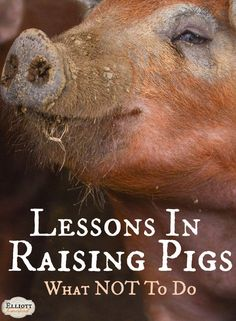 Pig Pen Ideas Discover Lessons in Raising Pigs - The Elliott Homestead I feel like I could fairly easily write a book on how NOT to farm. The way NOT to do things. And still here I am talking about lessons in raising pigs. Raising Farm Animals, Raising Chickens, Pigs Raising, Pig Farming, Backyard Farming, Farming Ideas, Backyard Barn, Backyard Chickens, Homestead Farm