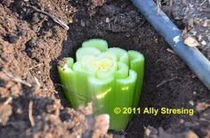 Garden Ally: Magic Celery