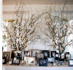 wishing tree and family photos