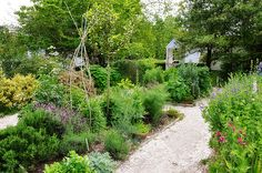 Beautiful Vegie and Herb Garden. Love  the well-defined, but casual pathways, and the vertical elements.