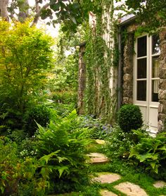 Beautiful ferns in a shady area and see the stepping stone plants on the ground.