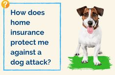 """It's Dog Bite Prevention Week. A question we are asked is """"How does home insurance protect me from a dog attack?"""". Check out Terria's blog for the answer and also some tips to prevent a dog bite. #DogBitePrevention #HomeInsurance Dog Attack, Home Safety, Home Insurance, Dogs, Check, Safety At Home, Pet Dogs, Doggies"""
