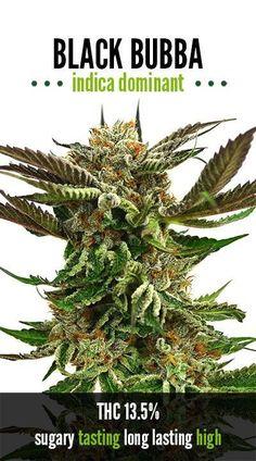 The Green Solution - Strains -Black Bubba -RD Cannabis Oil, Medical Cannabis, Cannabis Edibles, Buy Cannabis Online, Buy Weed Online, Weed Strains, Cbd Oil For Sale, Marijuana Plants, Medical Marijuana
