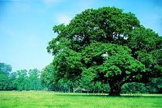 Afbeeldingsresultaat voor bomen