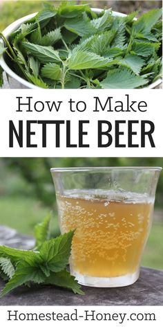 Homebrewing projects Tangy and mineral rich, this wild harvested and fermented nettle beer recipe is a delicious drink, reminiscent of hard cider. Learn how to make it at Homestead Honey. Beer Brewing, Home Brewing, Yummy Drinks, Healthy Drinks, Healthy Food, Fermentation Recipes, Beer Recipes, Coffee Recipes, Homebrew Recipes