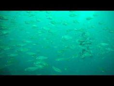 中性浮力で魚の群れと泳ぐ東京のダイビングスクールは足立区綾瀬近く