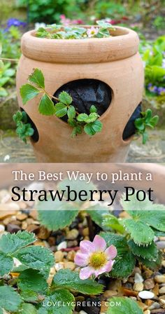 The best way to plant a strawberry pot with tips on choosing plants, erosion, watering, and compost Farm Gardens, Small Gardens, Growing Herbs, Growing Vegetables, Fruit Garden, Vegetable Garden, Herb Garden, Gardening For Beginners, Gardening Tips