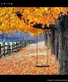 Beautiful Autumn!