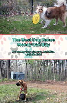 what is the best dog fence system on the market today? It's almost invisible…