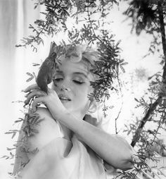 steroge: Marilyn Monroe, from the Bird Sitting, 1956 by Cecil Beaton