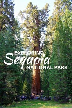 Guide and tips for visiting Sequoia National Park with kids in California, USA. See the largest trees on Earth like the General Sherman tree pictured here.
