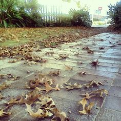 Stellenbosch in Autumn ; Rest Of The World, Stepping Stones, Outdoor Decor, Autumn, Instagram, Stair Risers, Fall
