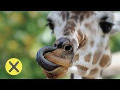15 Curiosidades del reino animal