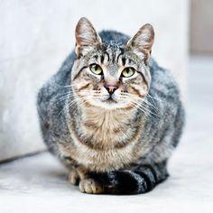 Se parece a un gatito que conozco que es de un gran amigo :)