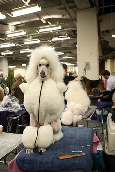All sizes | Westminster 12 | Flickr - Photo Sharing!