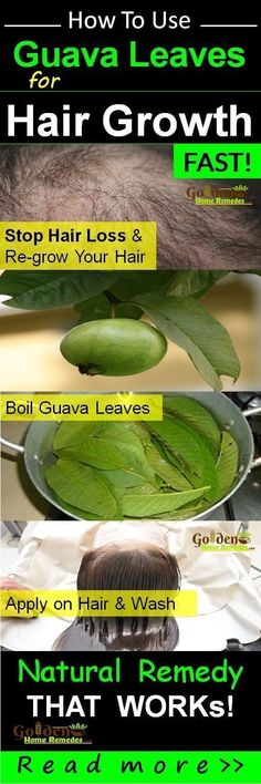 Guava leaves for Hair growth: This is the best natural remedies for hair loss you can try. They effectively stop hair loss and stimulate new hair growth. How Guava Leaves Stop Hair Fall and Promotes Hair Growth Fast, Benefits of Guava Leaves to Boost Hair #hairlossremedymen #homemadefacemasksformen #Besthairgrowthremedies