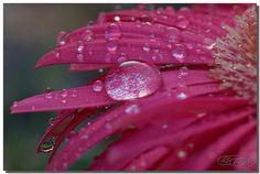 Droplet Queen by Cesar Cabrera