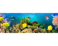 Fototapety na stenu Sea Corals F860