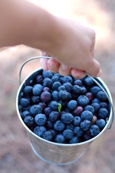 This is one of my fondest memories!! Picking blueberries on the hill on the farm in Connecticut with my grandmother, aunt and cousins!!!!!!!