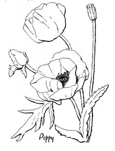 Nice Poppy Coloring Pages 41 Poppy Coloring Page for