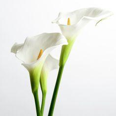 White Arums by Bernard Jaubert _