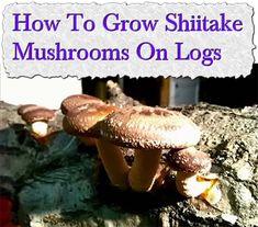 How To Grow Shiitake Mushrooms On Logs