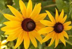 Atunci cand este umed, solul lutos este alunecos, iar cand este uscat formeaza bulgari. In cazul in care in gradina ta exista un astfel de sol, iata ce flori poti planta: