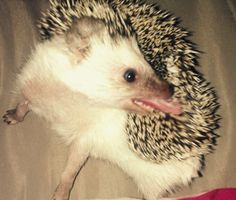 Crazy hedgehog :-)