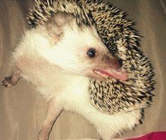 Crazy hedgehog :-)